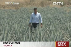 Diageo wants to buy Mexico's oldest tequila maker, Jose Cuervo