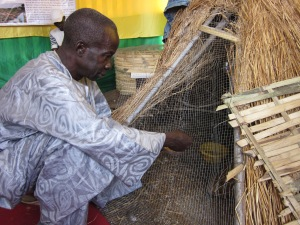 Senegal farmers' debt trap