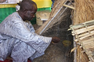 Senegal farmers' debt trap